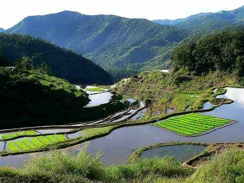 banaue rice terraces paddies ready for planting care ifugao