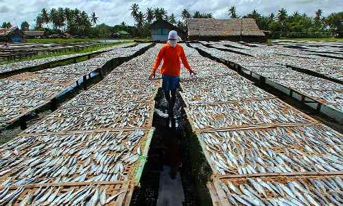 Dumolog Fish Drying Area