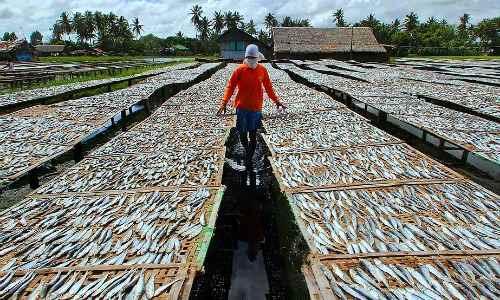 Dumolog Fish Drying Area