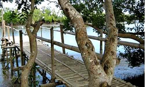 Culajao Mangrove Eco-Park