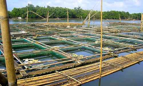 Aquaculture Farm