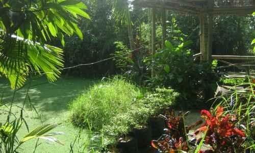 Wenys Garden