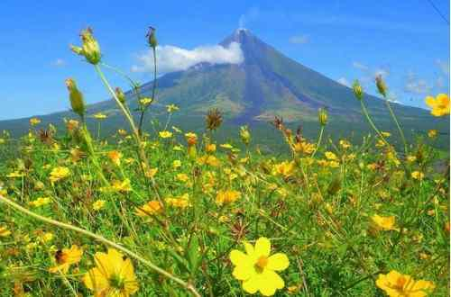 Flowers and Mayon Volcano care mayon-volcano