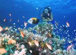 Diving Scenes care cheap-places-to-retire