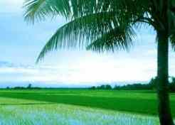 Ricefield care cheap-places-to-retire