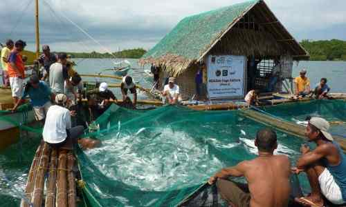 Aquaculture business care jobs-in-the-philippines