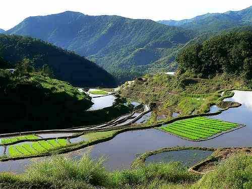 banaue rice terraces paddies ready for planting care ifugao