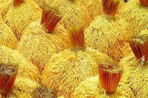 Harvested Tinawon Rice care ifugao