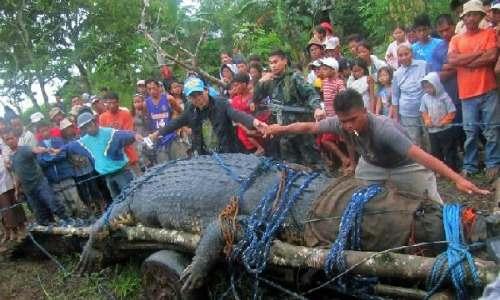Fearsome Crocodile named Lolong